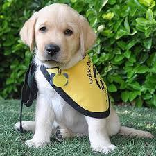 GDA Puppy Cam